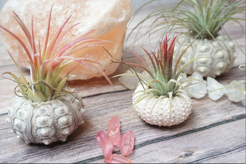 airplants with crystals.jpg