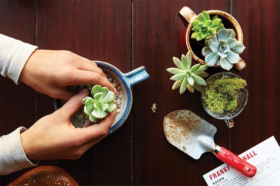 MO-kia-opener-succulents-matt-zugale-900x600.jpg