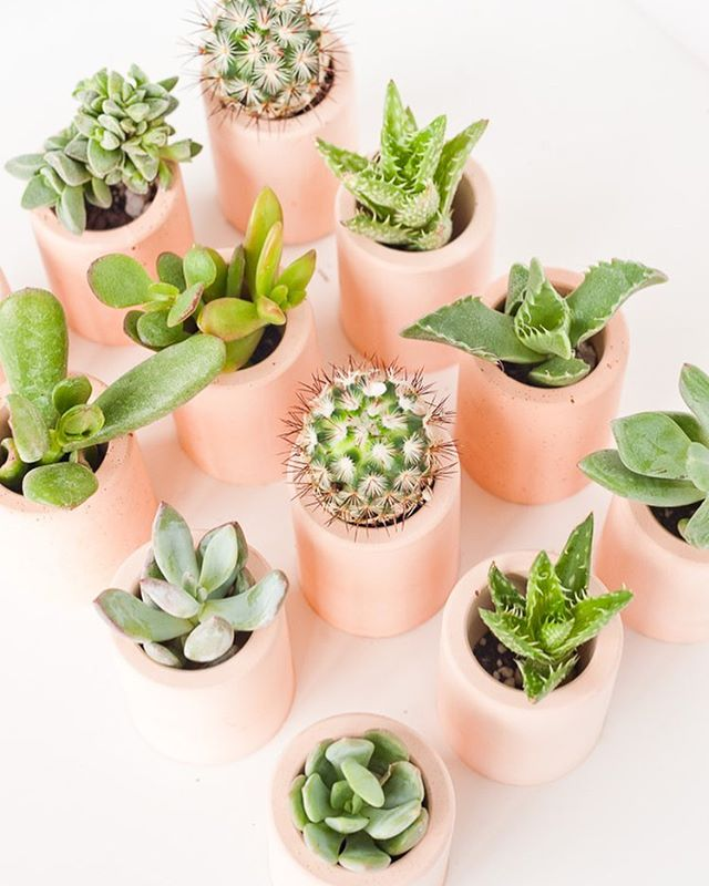 🌵Not only are succulents & plantlife beautiful, they also purify the air in your home making your place a zen space. 🌵Add more arrangements to your home & join us on 5/1 at Frankford Hall for our Cactus & Crystals Workshop - we're over 75% sold out so grab tickets STAT!
