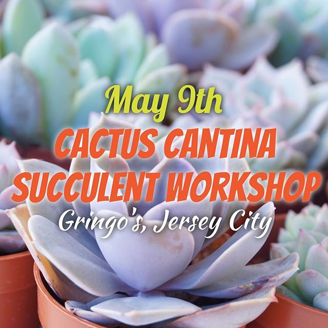 🌵Join us on 5/9 for another taco-licious Cactus Cantina Succulent Workshop at Gringo's in Jersey City!🌵Tickets include a FREE drink & all the materials to plant your very own succulent arrangement in a margarita glass. 🌵Register via link in bio OR tag 3 friends & you could win a FREE ticket! Ready, set, go!