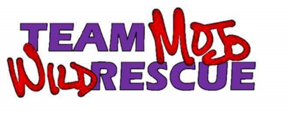 Team Mojo WildRescue