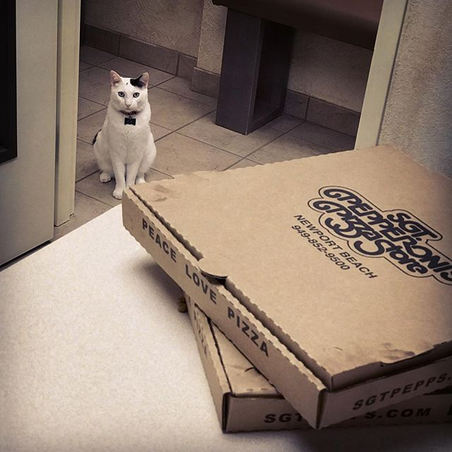 That feeling when everyone is invited to the pizza party but you... #catclinicvet #keepcalmandlovecats #catclinicvetspotty  #peacelovepizza