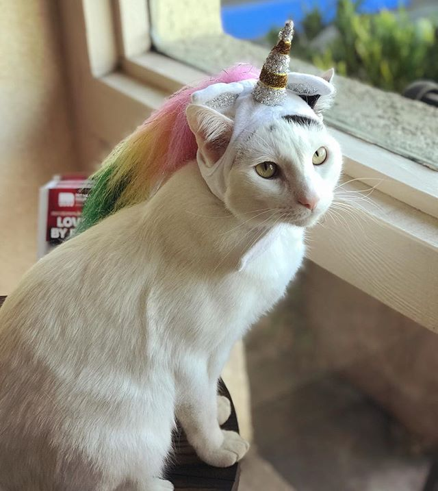When you know you're magic... #catclinicvetspotty #happyhalloween #catclinicvet #unicorn #keepcalmandlovecats