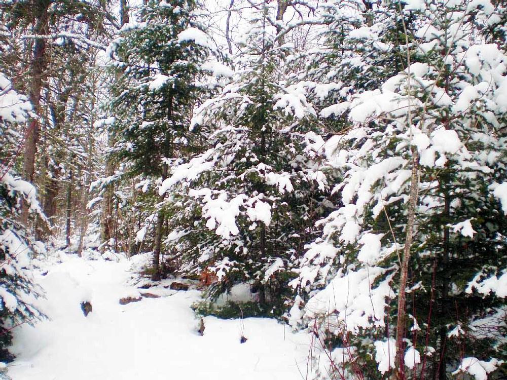 BBL winterSM.jpg