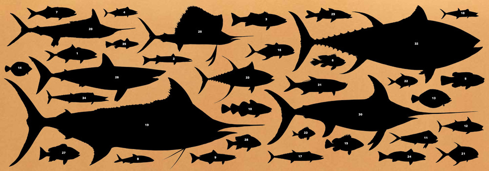 fish.endpaper.jpg