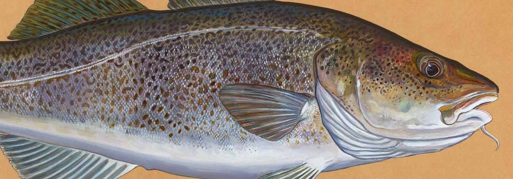 02.fishpart1-20.jpg