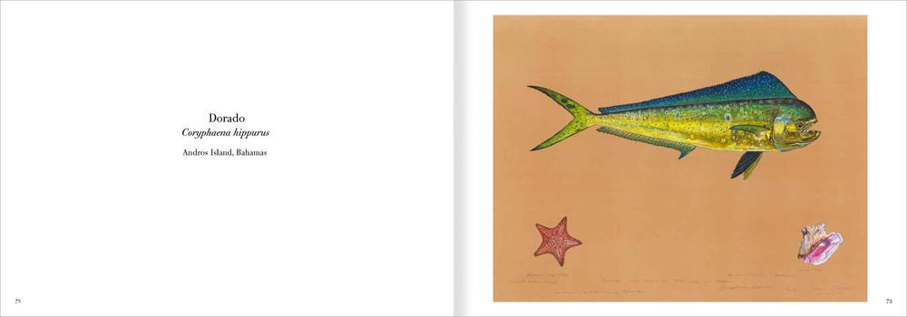 02.fishpart1-23.jpg