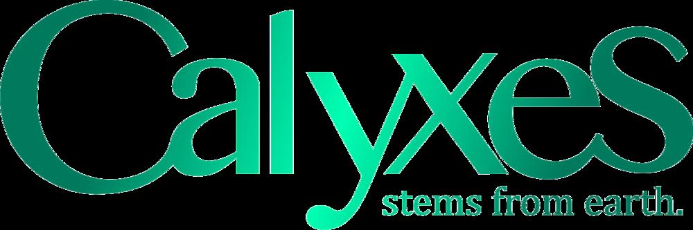 Calyxes