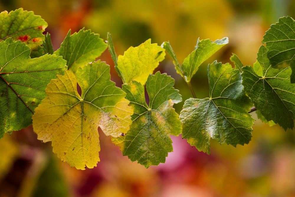 Contact Varner Wine