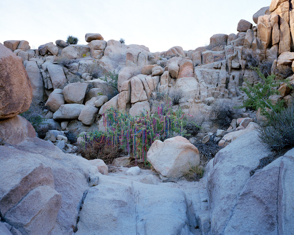 WillowVariation_Desert_LaurenSilberman.jpg