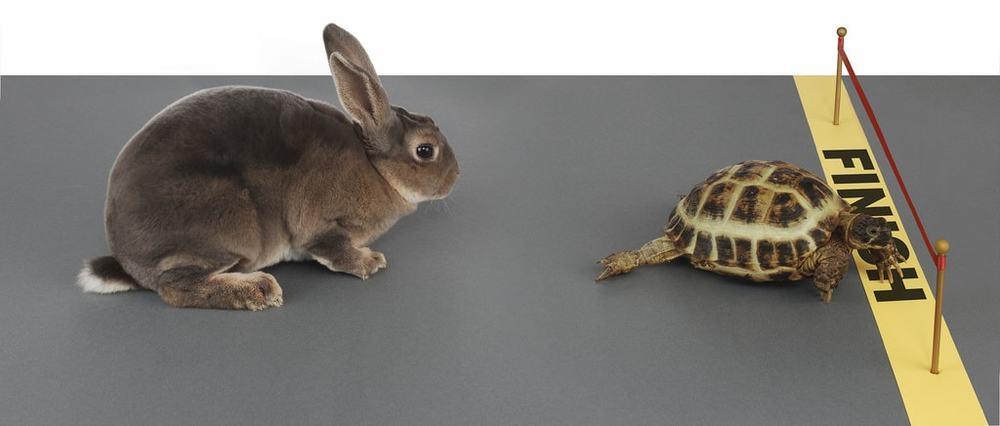 tortoise_slow_hare
