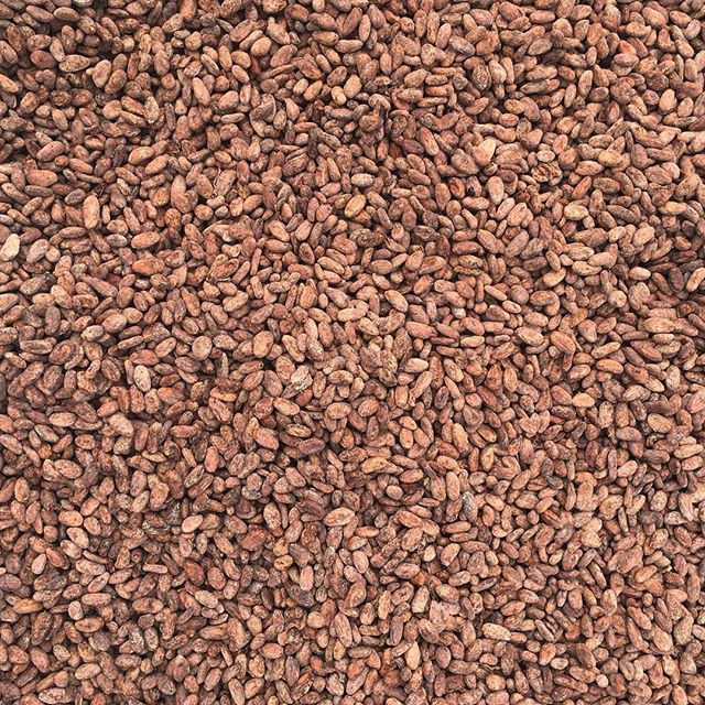 "Like small batches? We have less than a sack of Beniano ""wild"" organic Bolivian and Lachuá organic Guatemalan cacao remaining from the 2017 harvests. Tiny volumes with 💥flavor. Who wants some?"