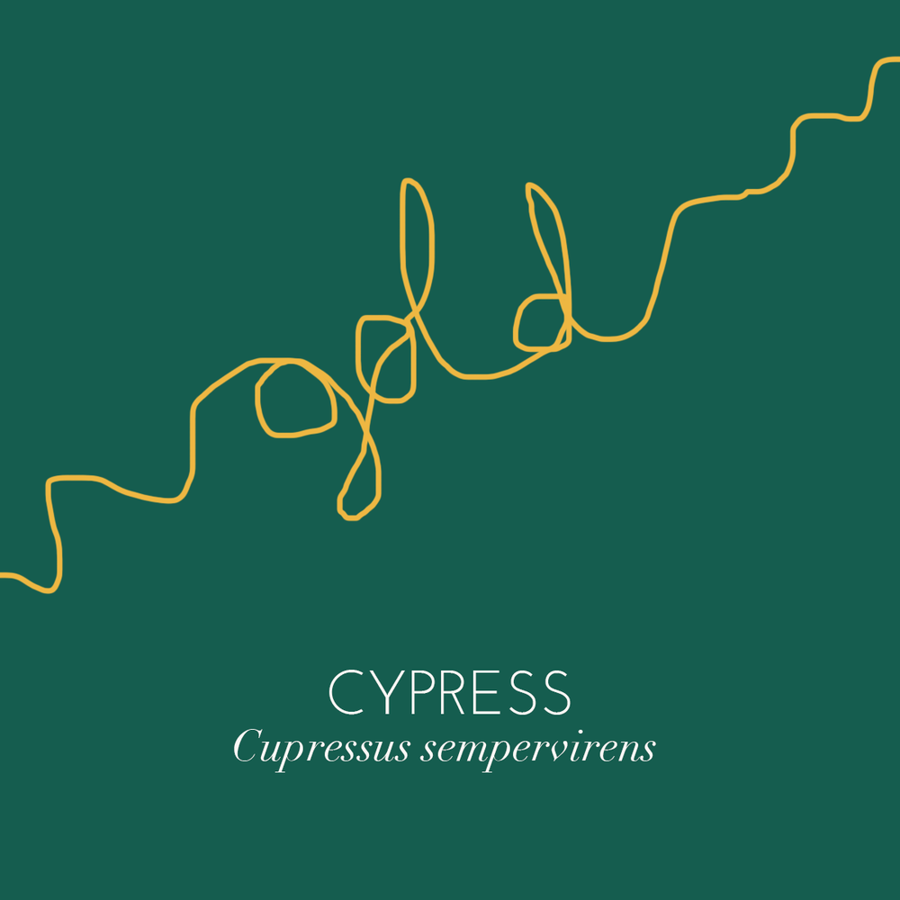 cypress,gold.png
