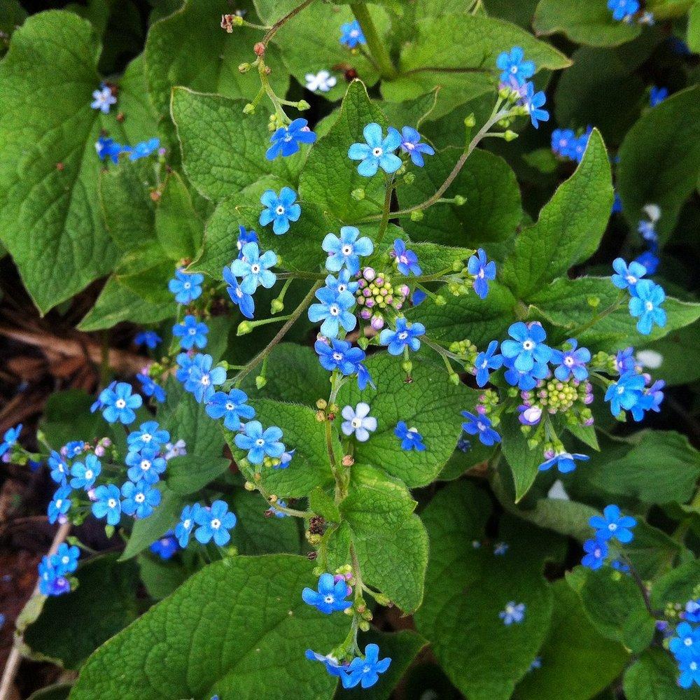 Flower Essences A Subtle Superpower Clare Kritter Clinical Herbalist