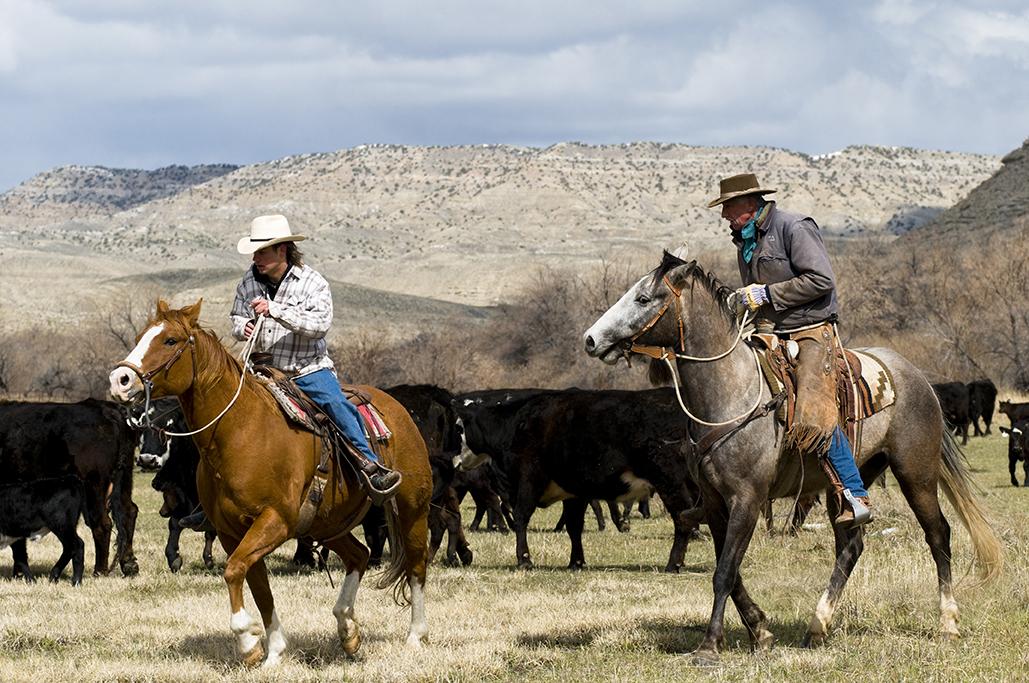 cowboysHorse