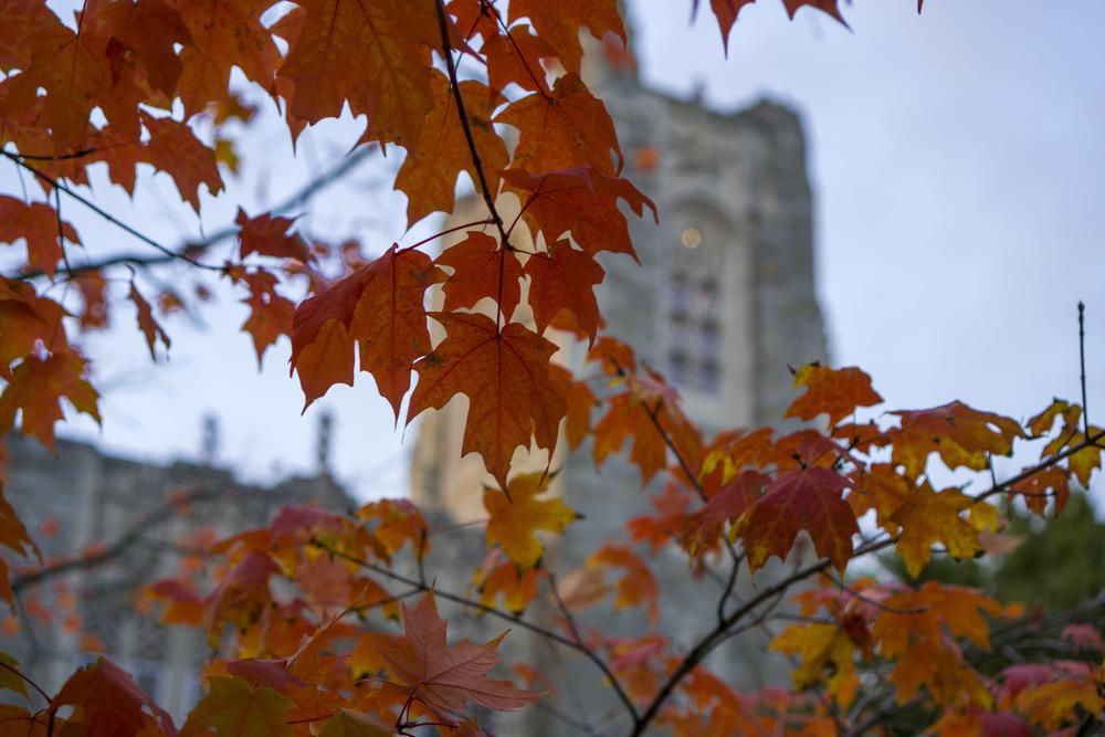 fall-4.jpg