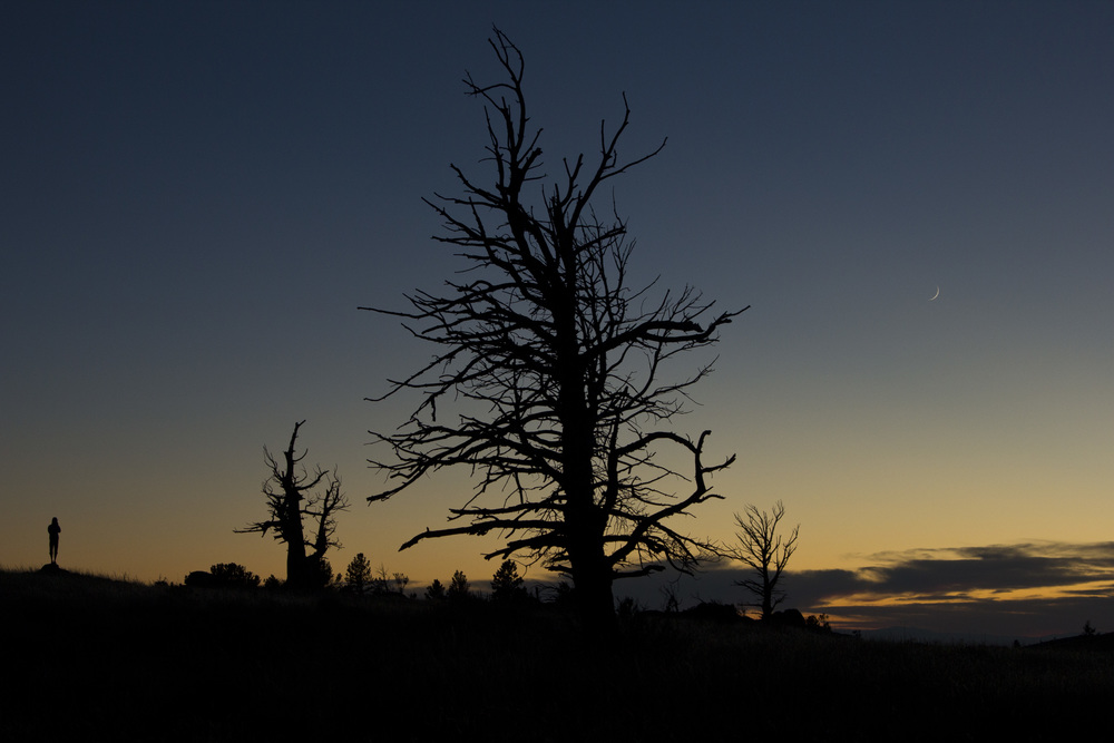 Twisted Trees and a Crescent Moon