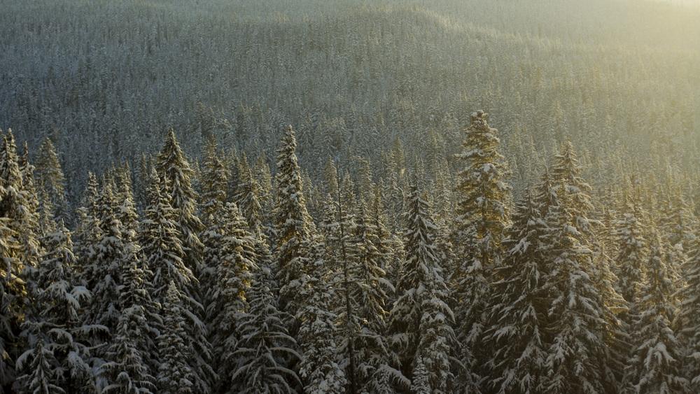 Endless Evergreens