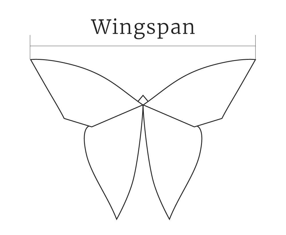 The sizes are approximative since it depends on how open the wings are