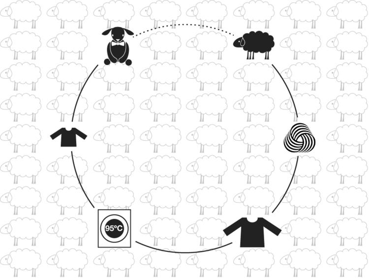 L'histoire de la laine
