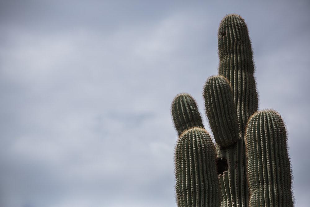 Arizona Trip 06.jpg