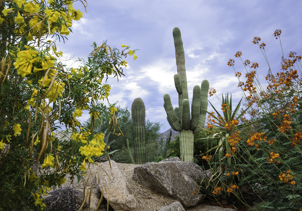 Arizona Trip 07_edited for web.jpg