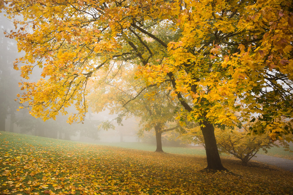 Foggy Fall Morning 2017-10-28_Photo 06 WEB.jpg