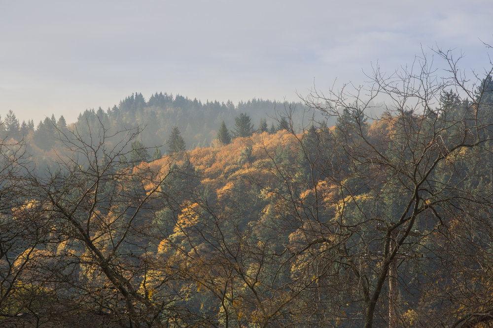 Foggy Cathedral Park 04 web.jpg
