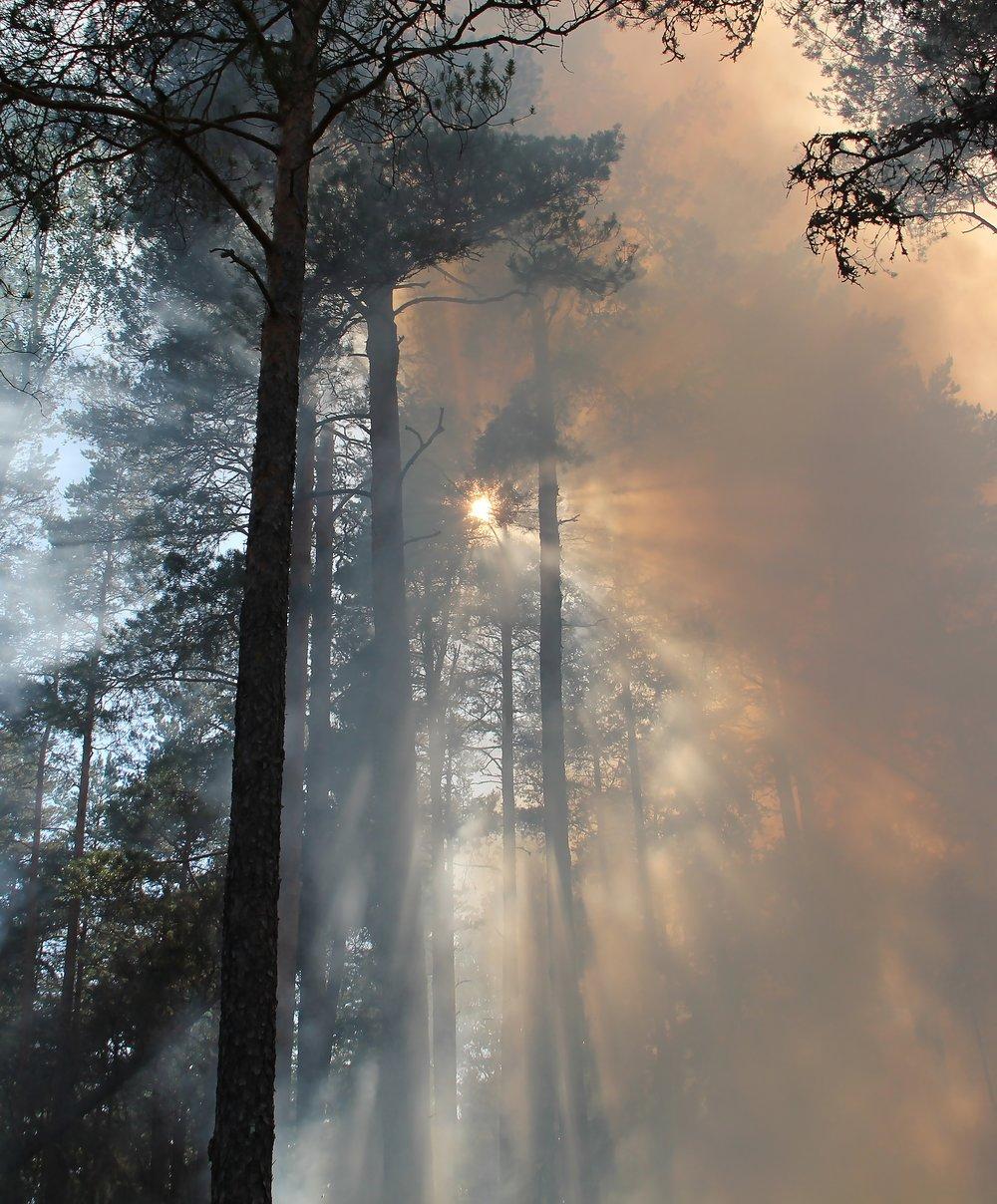 forest-fire-433683.jpg
