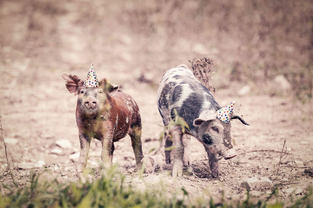 Weird: Check. You'll always find a soft spot for animals here, and a if they are doing something cute and a little weird, they are after my own heart. Hi little piggies! You a my kindred spirits today! Photo Credit: Ryan McGuire