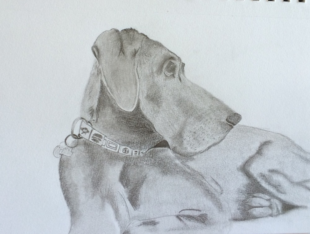Being sick has allowed me to re-explore hobbies and talents that I used to have, but put down in the passing of time. I have been able to remember how much I loved art (drawing, painting, clay, you name it). This is my beautiful beast-dog. You may remember her from such endearing descriptions as smelling like zoo-vagina.