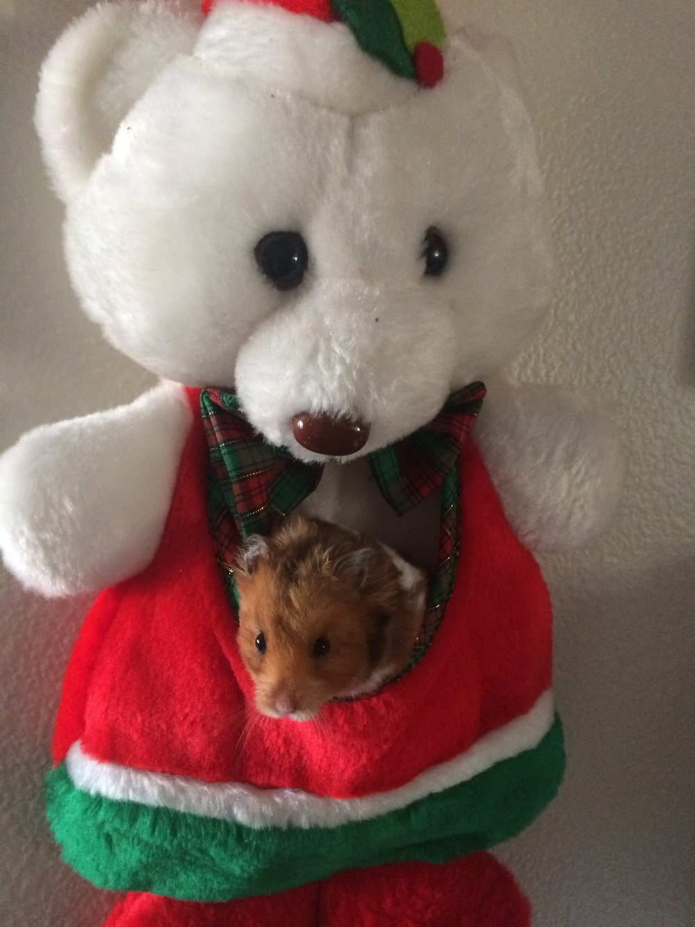 Frodo says that the meta irony of making his stocking a rodent is a little strange, but he's down with it, so long as it gets him a present from Santa Paws, which it did.