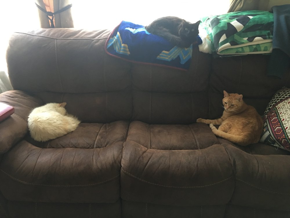 "The ""usual"" relationship between the three cats,  if  they managed to be in the same room."