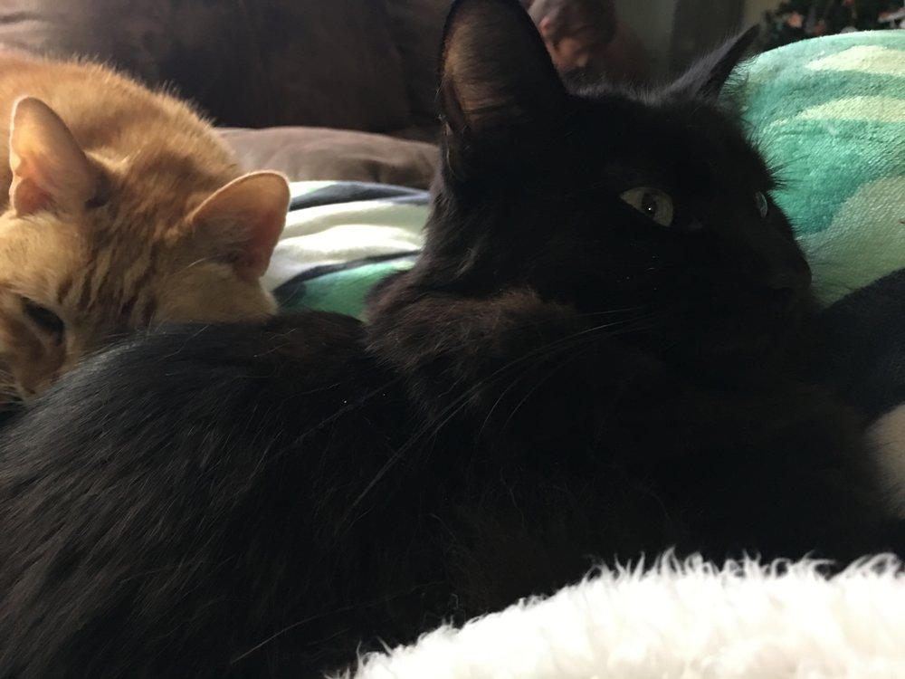 Now, we have snuggles all over the place. Happy kitties. I swear that Loki is purring and happy. It's impossible to take a picture of a black cat. They always look shocked or angry.