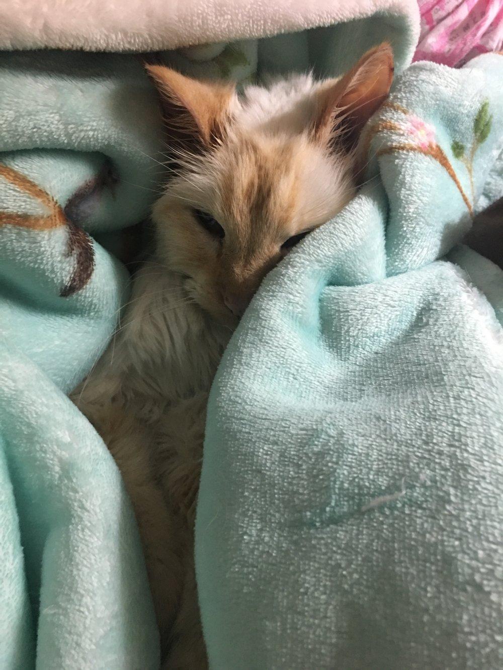 Poor kitty.