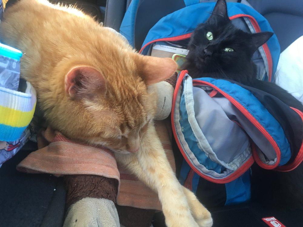 Traveling men. Not bothering Frodo one bit.