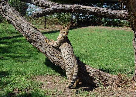 F1 female standing partially on a tree
