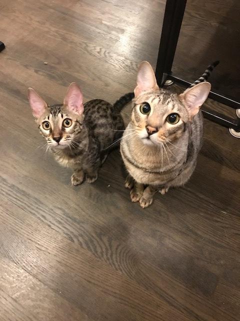 Arjun's cats at home 10.JPG