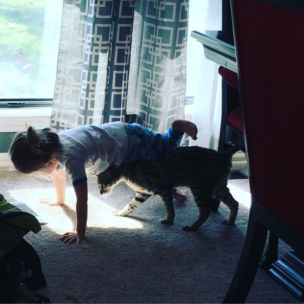 A1Savannahs F2 Lukas doing his morning Yoga with child