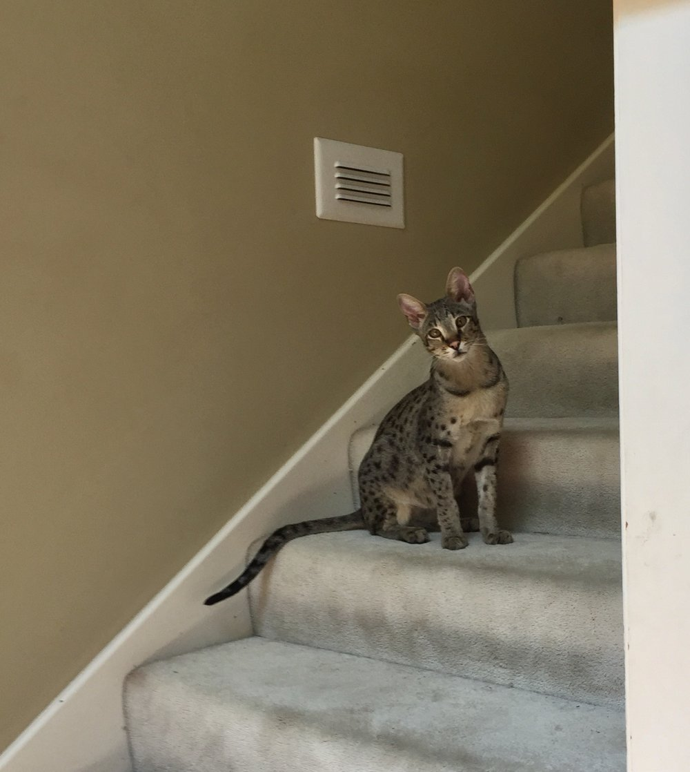 F2 Lukas on the stairs