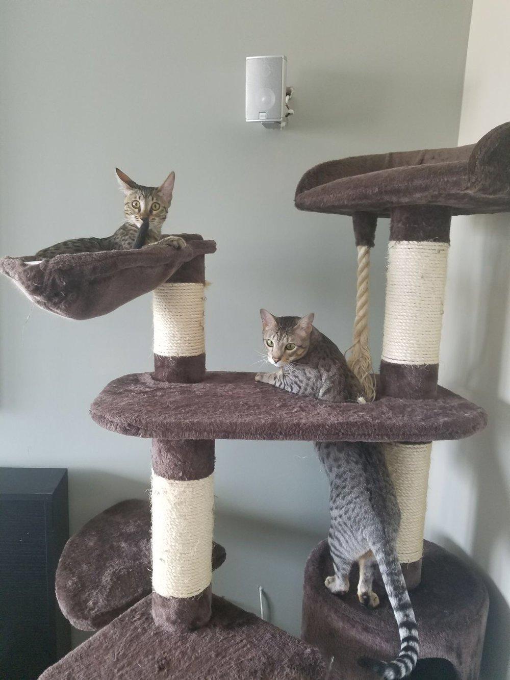 Arjun's cats at home 21.JPG