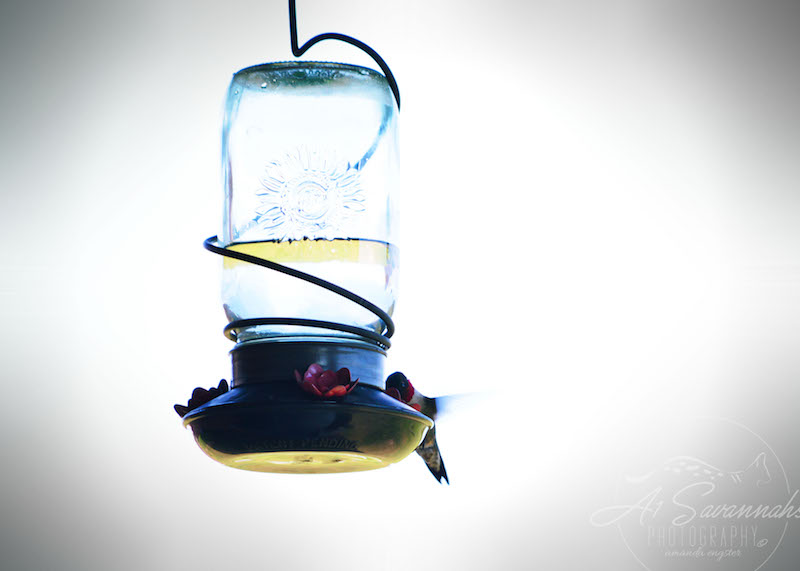 Hummingbirds at the feeder