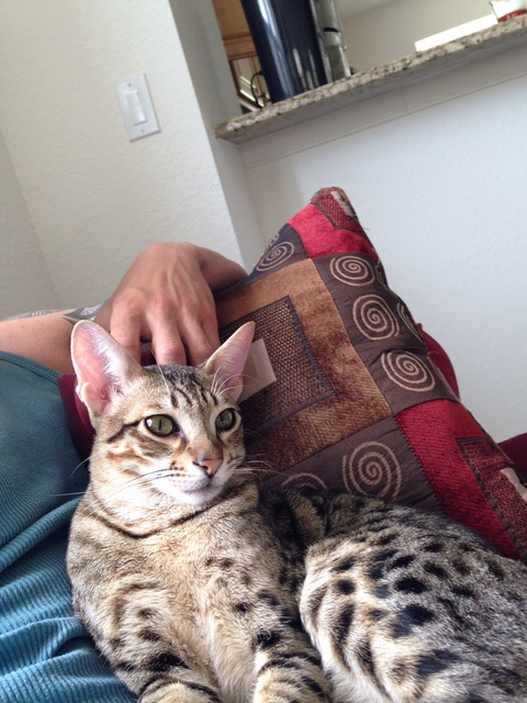 F5 Loki is lounging in dad's arm