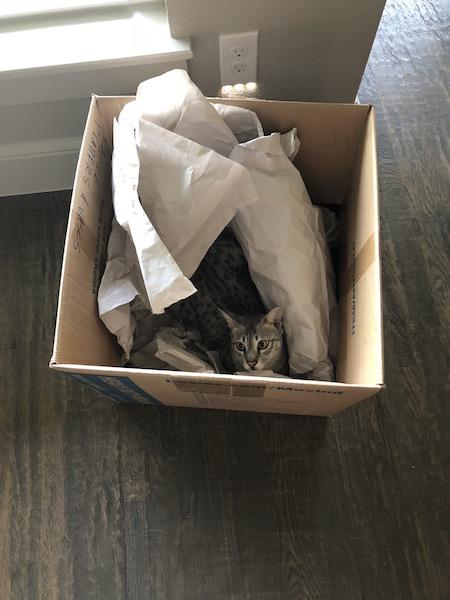 SBT Loki in a box