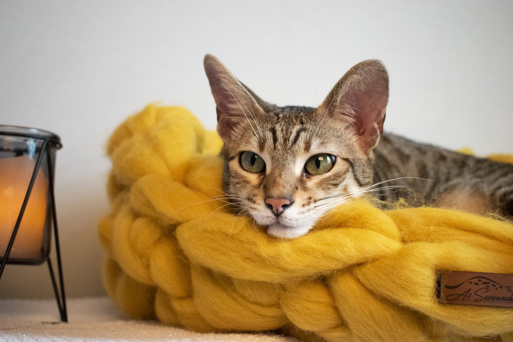 Merino Wool Cat Bed - Amber