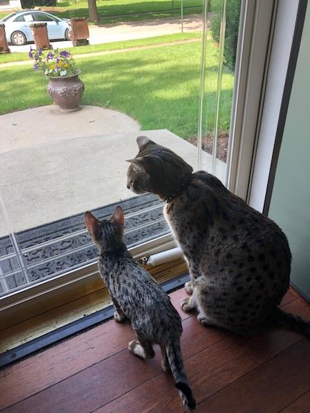 F2 Loki and F6 Lex sitting by the patio window