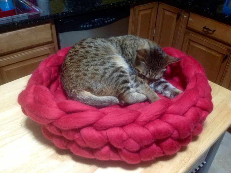 bed time for Jax in his Merino wool cat bed