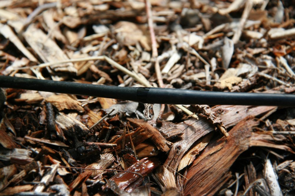 Quarter inch drip line at GFE.