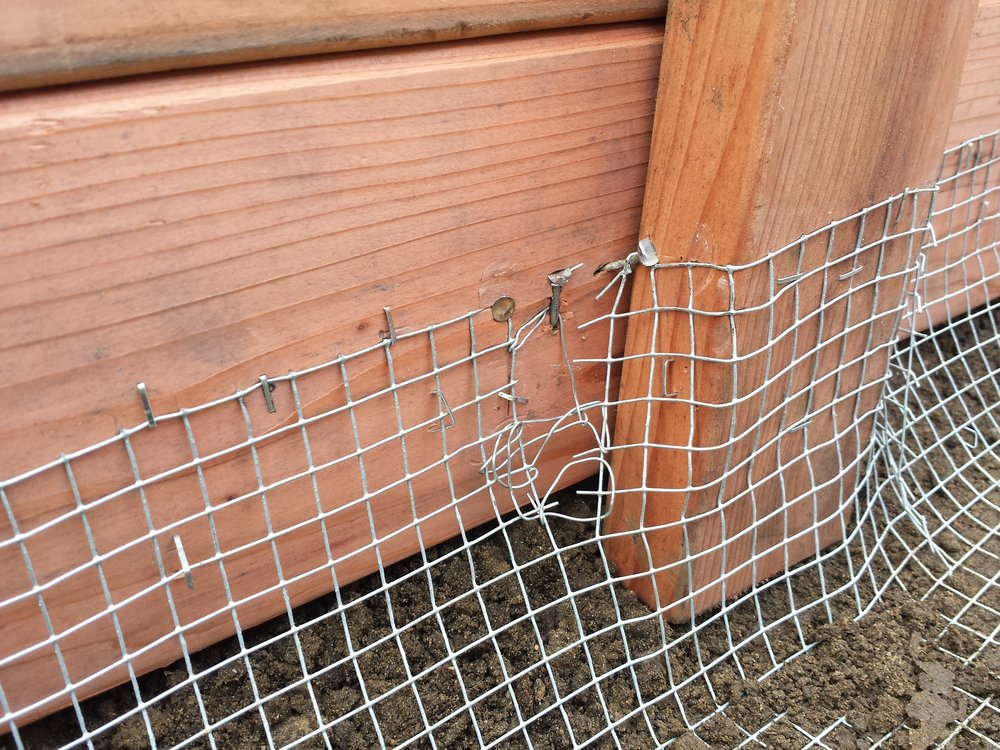 Gopher wire in a new raised bed.