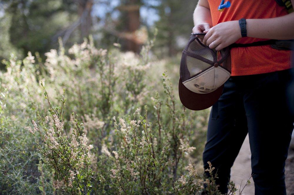 Garden hat in the Sierras!